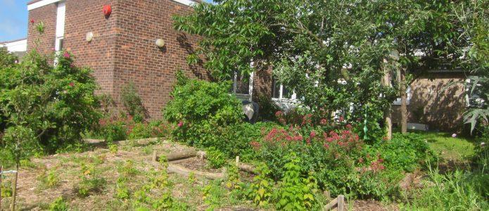 School forest garden