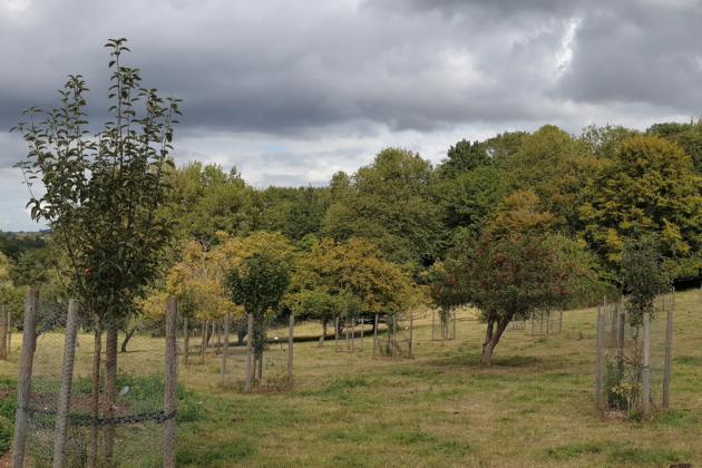 Genetic Fingerprinting of the Sussex Apple Varieties