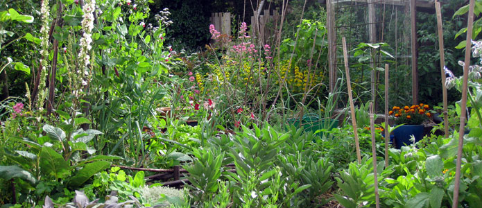 https://brightonpermaculture.org.uk/wp-content/uploads/courses/permagardening/slideshow/permaculturegarden11.jpg