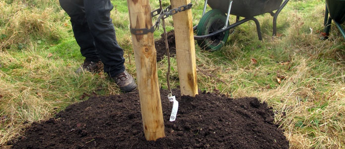 https://brightonpermaculture.org.uk/wp-content/uploads/courses/planting/slideshow/treeplanting05.jpg