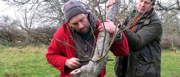 https://brightonpermaculture.org.uk/wp-content/uploads/courses/pruning/slideshow/pruningtrees06.jpg