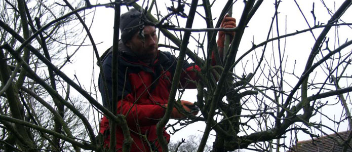 https://brightonpermaculture.org.uk/wp-content/uploads/courses/pruning/slideshow/pruningtrees10.jpg