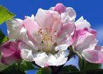 blossomtourtmb