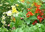 Practical permaculture gardening