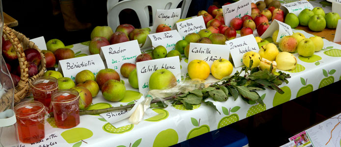 https://brightonpermaculture.org.uk/wp-content/uploads/events/appleday/slideshow2013/appledaybrighton02.jpg