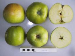 Alfriston apple