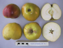 Bossom apple