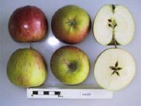 Dalice apple