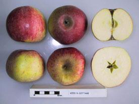 Keed's Cottage apple