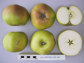 Lady Hopetown apple