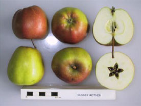 Sussex Mother apple