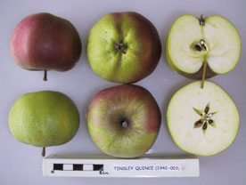 Tinsley Quince apple