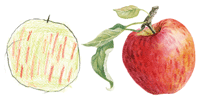 drawings of apples