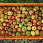fruitfactory3