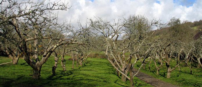 https://brightonpermaculture.org.uk/wp-content/uploads/fruit/homefarm/orchards02.jpg