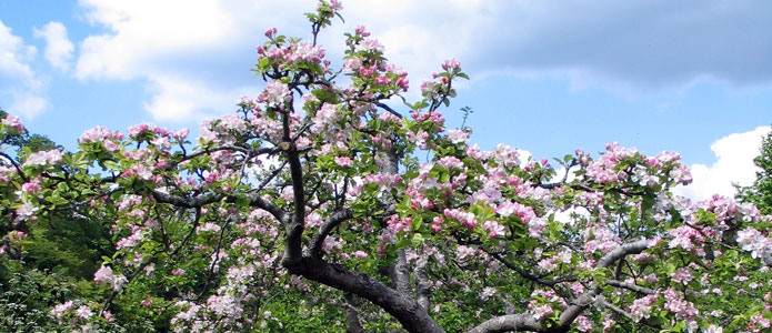 https://brightonpermaculture.org.uk/wp-content/uploads/fruit/homefarm/orchards05.jpg