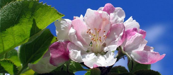https://brightonpermaculture.org.uk/wp-content/uploads/fruit/homefarm/orchards06.jpg