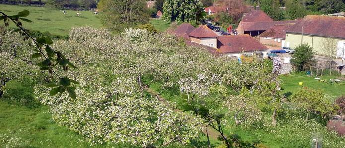 https://brightonpermaculture.org.uk/wp-content/uploads/fruit/homefarm/orchards08.jpg