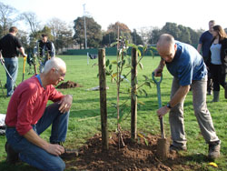Chichester Community Orchard