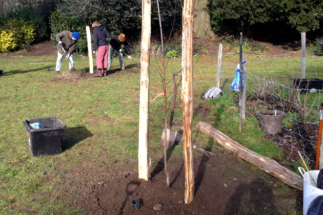 Planning and planting a small orchard