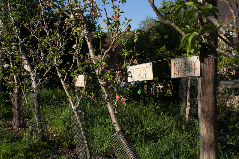 Community orchards post