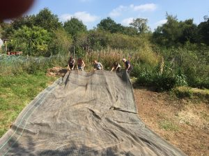 Laying the pond liner