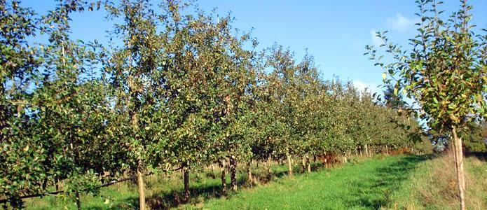 orchardsborders - brunoliehnorchard.jpg