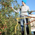 orchardsborders - brunoliehnpicking.jpg