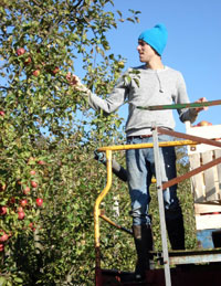 orchardsborders - brunoliehnpicking.jpg