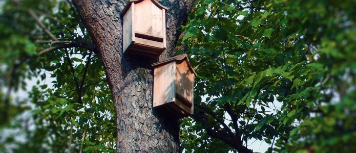 bat-boxes-1581018_960_720