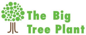 Big Tree Plant