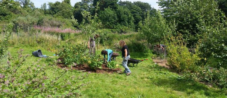 https://brightonpermaculture.org.uk/wp-content/uploads/volunteer/Plot-2.jpg
