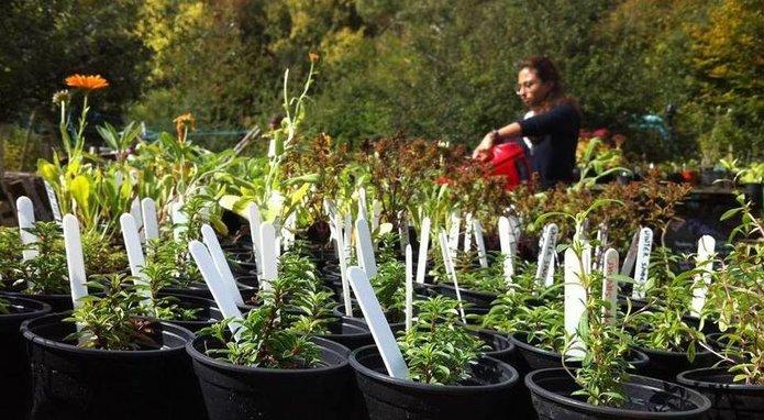 https://brightonpermaculture.org.uk/wp-content/uploads/volunteer/plot/plotplants.jpg